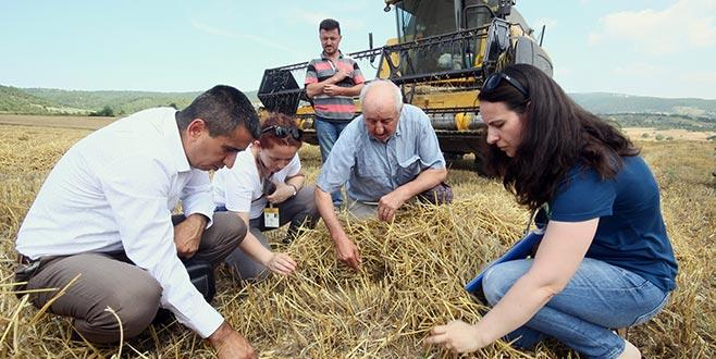 Yenişehir'de buğday hasadı başladı