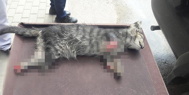 Bursa'da vahşet! Yavru kedi 4 ayağı kesilerek öldürüldü