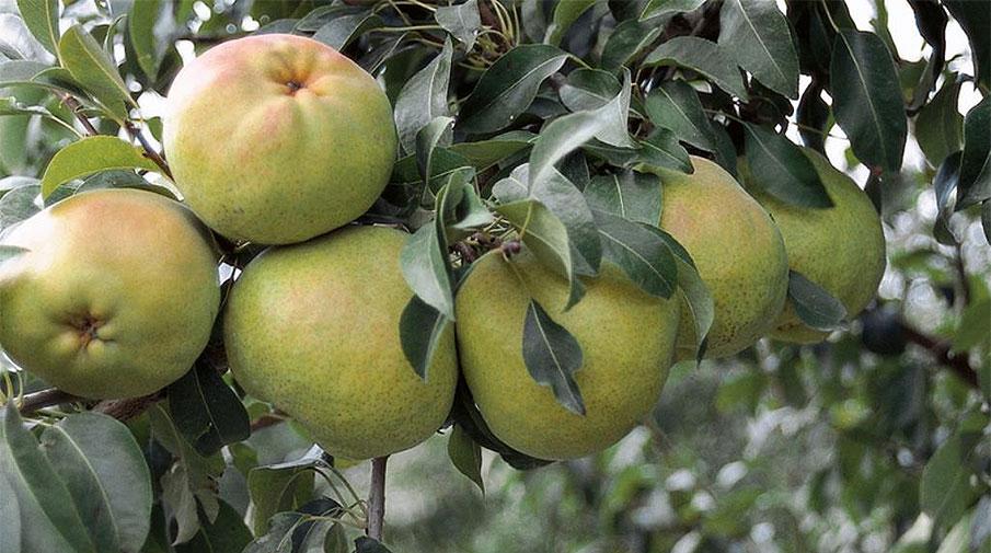Bursalı meyve yetiştiricilerine destek