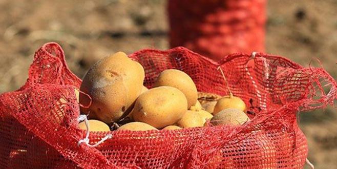 Yükselen patates fiyatlarına müdahale geldi! İşte Bursa'da patatesin satış fiyatı