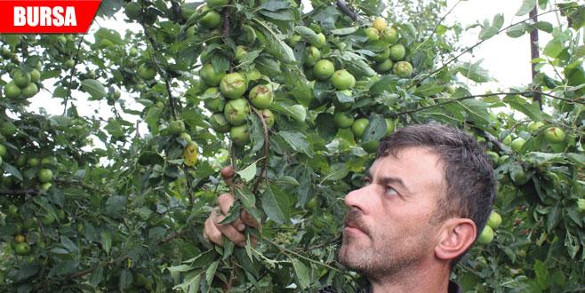 Ceviz büyüklüğünde dolu yağdı, binlerce ton meyve zarar gördü