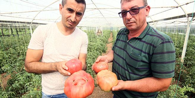 Sera tarımı ilgi çekiyor