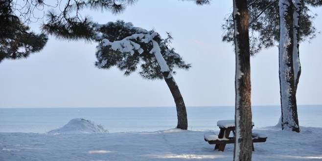 Çam ağaçlarına bakım