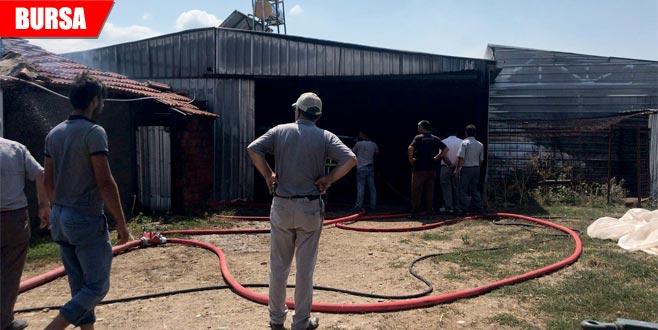 Çiftlikte yangın: Çok sayıda hayvan telef oldu