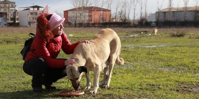 Büyükşehir Belediyesi, sokak hayvanlarını unutmadı