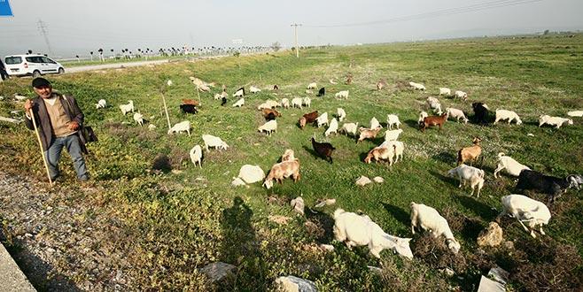 Yenişehir'deki 700 dönüm merada ıslah çalışması