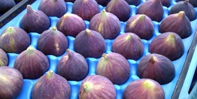 Siyah incir ihracatı 17 bin tona ulaştı