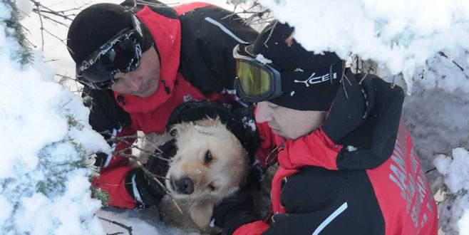 Uludağ'da jandarmadan köpek kurtarma operasyonu