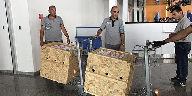 Öksüz ve Umut'tan iyi haber! Uçakla Bursa'ya gönderildiler