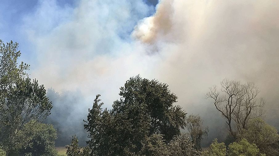Hayri Türkyılmaz: Yangını şüpheli buluyorum
