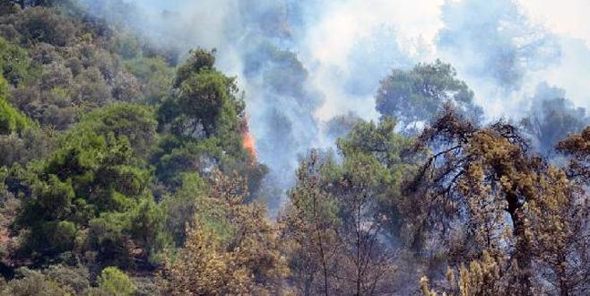 Bursa'dan bir orman yangını haberi daha