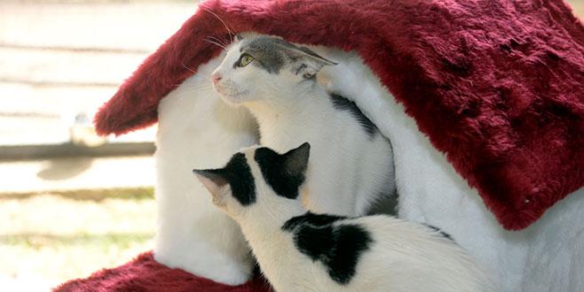 Osmangazi'de yavru kediler sahiplendiriliyor