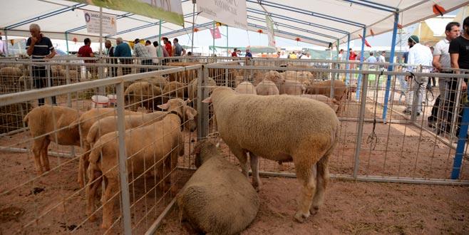 Tarım ve hayvancılık ihmal edilmemeli