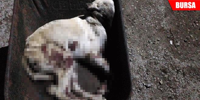 Tavuğa saldıran köpeği pompalıyla vurdu