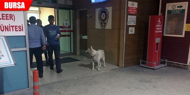 Sahibini hastane kapısında bekleyen köpek çalındı