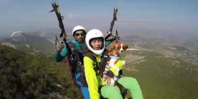 Uçan köpek Oscar