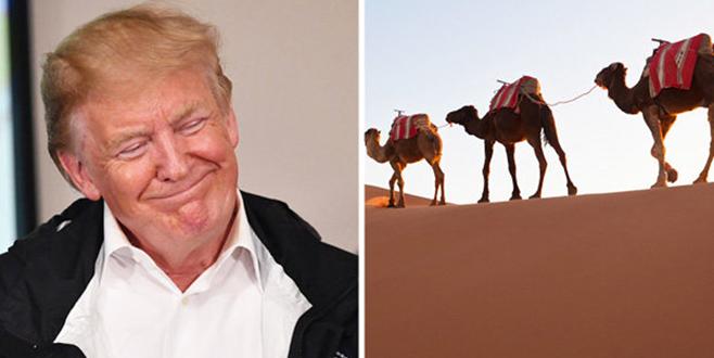 Sahra Çölü'ne duvar örün
