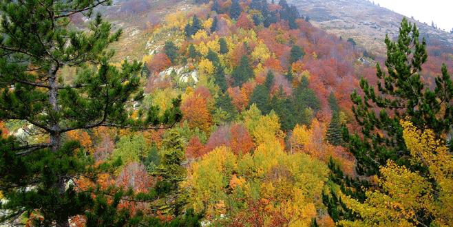 Uludağ sonbahar ile renklendi