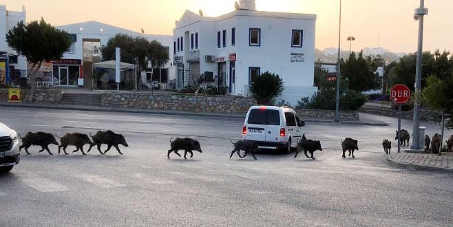 İlçe merkezinde sokak sokak gezdiler