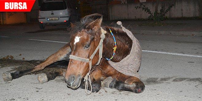 Hamile atı sokak ortasında ölüme terk ettiler