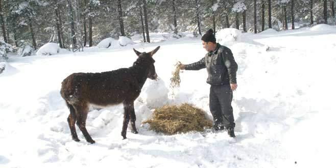 Yaban hayvanlarına ormancı şefkati