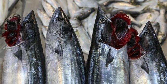 Denizden palamut fışkırdı ama balıkçılar tedirgin