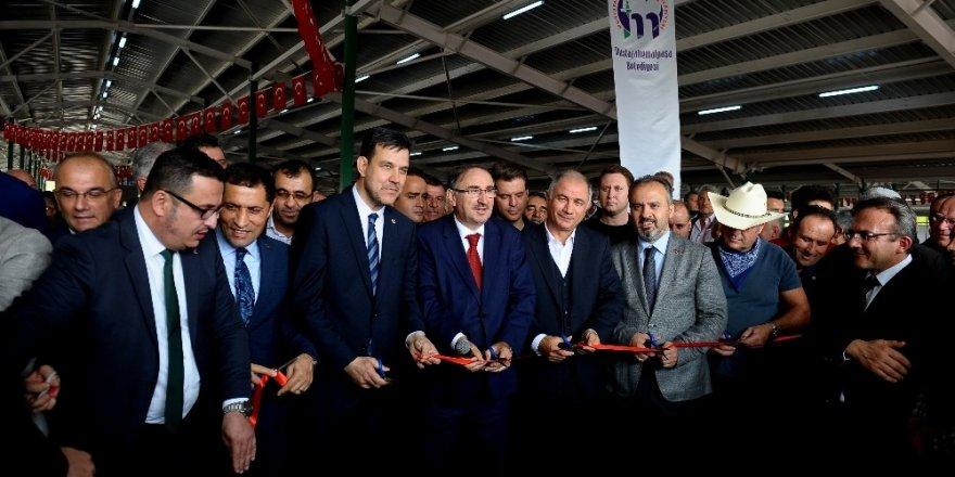 Mustafakemalpaşa canlı hayvan pazarı açıldı