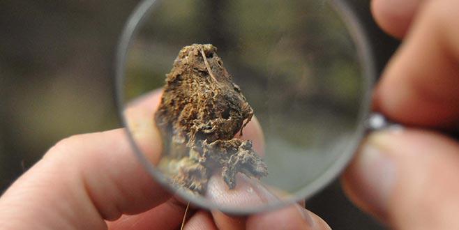 İnegöl'de Gal Arısı'yla biyolojik mücadele