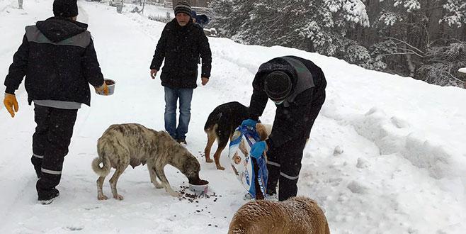 Uludağ'da donmak üzere olan köpekler kurtarıldı