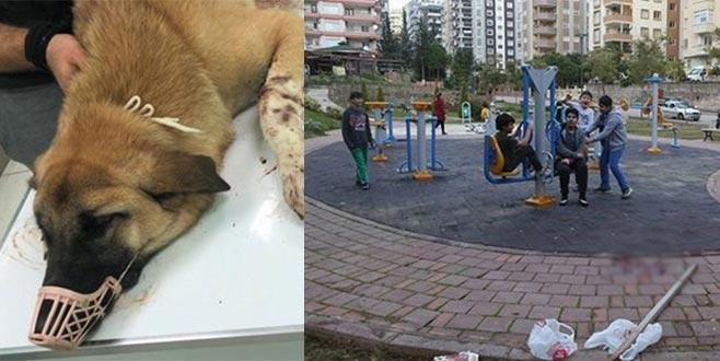 Çocuk parkındaki sokak köpeklerine pompalıyla saldırı