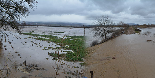 Şiddetli yağmur dereleri taşırdı! Tarım arazileri sular altında