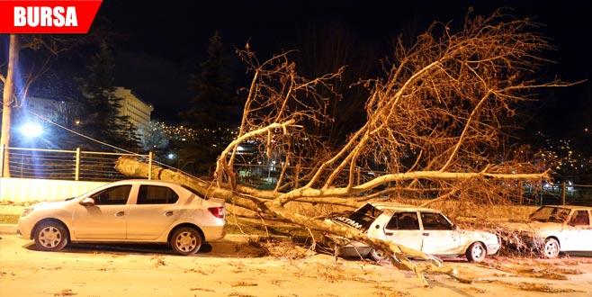 Fırtına yıktı geçti! Çatılar uçtu, ağaçlar devrildi