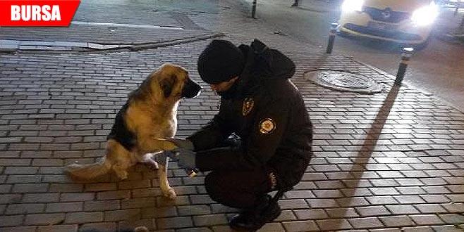 'Gece Kartalları'ndan yaralı köpeğe şefkat eli