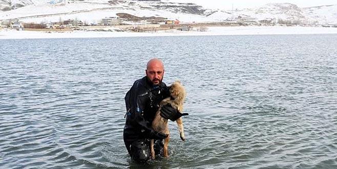 Donmak üzereyken kurtarılan köpek, BBC'de haber oldu