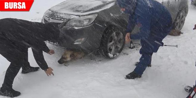 Otomobilin altında kalan 'Paşa'yı jandarma kurtardı