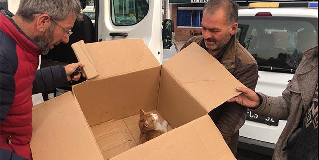Otomobil altında kalan kediye esnaf sahip çıktı