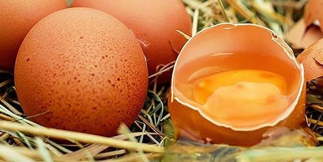 Yumurta üreticisi zorda