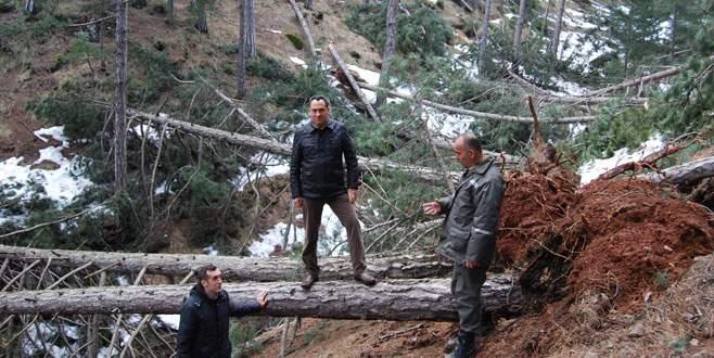 Ormanda hasar büyük