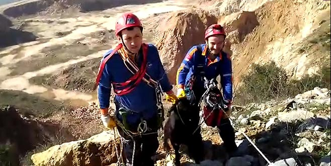 Yamaçta mahsur kalan keçiyi AFAD kurtardı