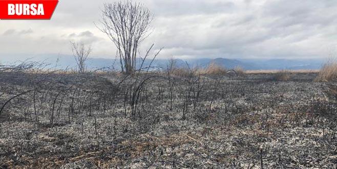 50 dönümü küle çeviren yangına soruşturma