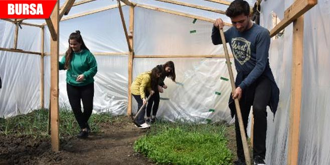 Okul bahçesinde meyve sebze yetiştiriyorlar