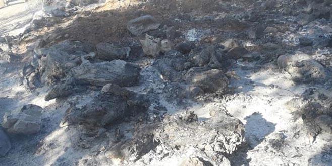 Ahırda çıkan yangında 100 küçükbaş hayvan telef oldu