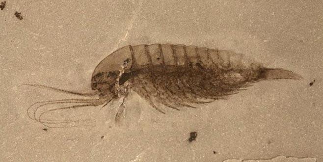 '518 milyon yıllık' binlerce fosil bulundu