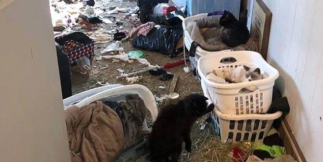 Öldürdüğü 63 kediyi evindeki buzdolabında sakladı!