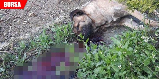 Vahşet! Bir hafta arayla 2 köpeği vurularak öldürüldü