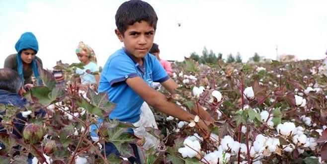 En çok çocuk işçi tarımda