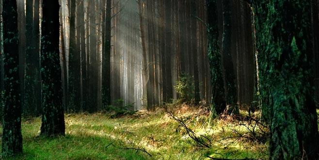 Tek seçmen için aslanlı ormanın ortasına sandık kuruldu
