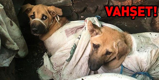 Çuvallara koydukları köpekleri döve döve öldürdüler!