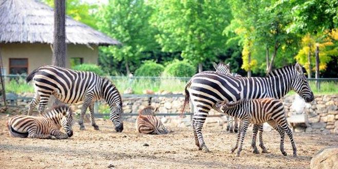 Bursa Hayvanat Bahçesi'ne 3 yeni üye