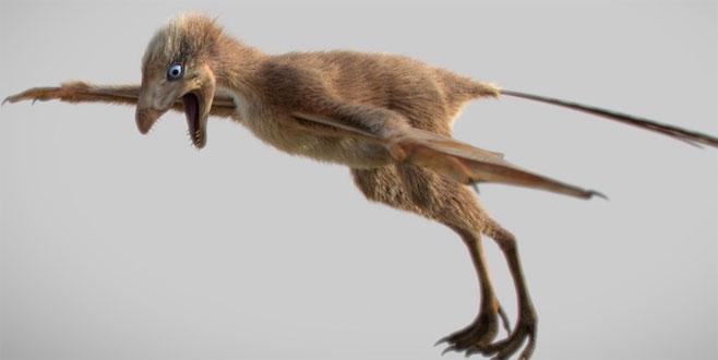 Yarasa kanatlı yeni dinozor türü keşfedildi